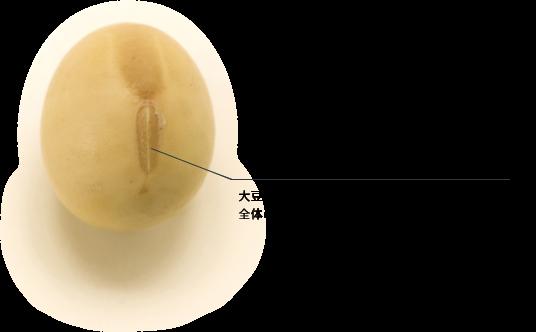 大豆の胚芽部分